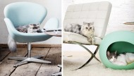 Pampered Pets in Modern Classic Style