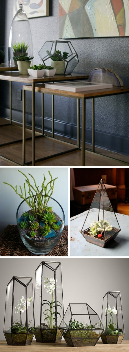 Terrariums in Modern Decor