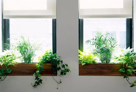 Tips For Making Your Window Sills Shine