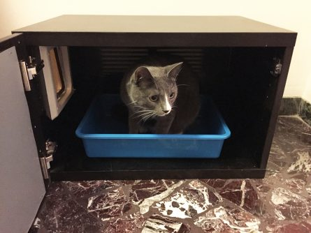 Creative Ways to Make Litter Boxes Blend In