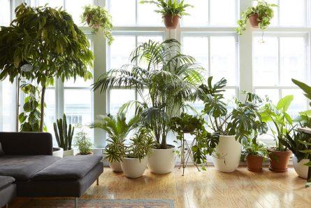 3 Plants Every Living Room Needs