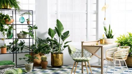 Liven Up Dark Apartments With These Lowlight Plants